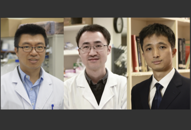 Three HKU academics receive Croucher Innovation and Senior Research Fellowship Awards