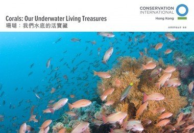 "HKU Swire Institute of Marine Science presents exhibition ""Corals: Our Underwater Living Treasures"""