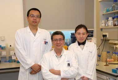 HKU scientists effectively suppress tumour growth by converting Salmonella into YB1 anaerobe bacterium