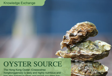 HKU Swire Institute of Marine Science helping local oyster industry