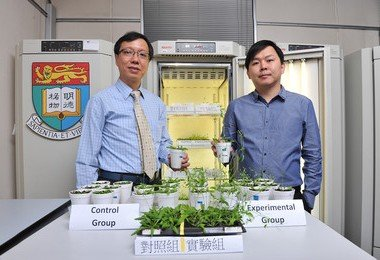 HKU botanists discover a new plant growth technology that may alleviate climate change and food shortage