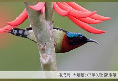 HKU develops bird information free mobile app