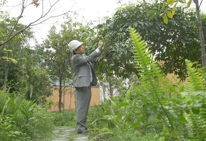 Professor CY Jim at the Sky Woodland at CLP's Chui Ling Road substation