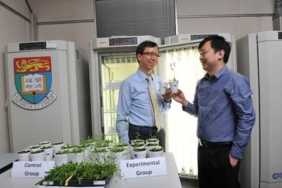 Dr Wallace Lim (left) holding the control Arabidopsis thaliana and Dr Yeesong Law of his team (right) holding the experimental Arabidopsis thaliana with PAP2 technology, both plants were 4 weeks old
