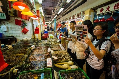 Students attempting grouper identification at Sai Kung wet market