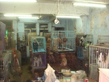 Unlicensed breeding of dogs in Hong Kong
