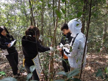 Citizen scientists in action: a group of volunteers conducting tree survey in the ForestGEO plot at Tai Po Kau